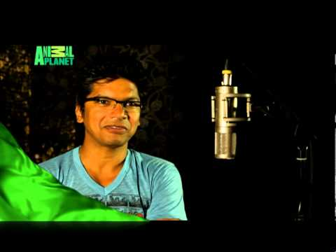 Shaan talks about Animal Planet's New Show - 'Yeh Mera India'