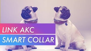 Link AKC Smart Collar Unboxing
