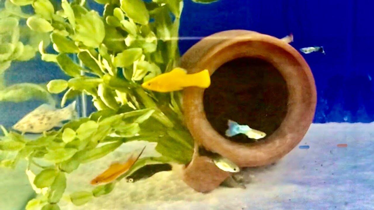 Beautiful Coral Reef Fish, Relaxing Ocean Fish, Aquarium Fish Tank & Relax Music 1080p HD