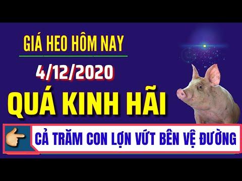 Giá heo hơi hôm nay ngày 4/12/2020 | Cả trăm con lợn bị vứt bỏ bên đường | Giá lợn hơi mới nhất