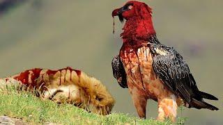 أخطر 10 طيور فى العالم    أهرب فور رؤيتها