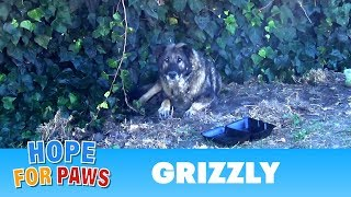 Senior German Shepherd abandoned by his owners.  I just don't understand this behavior  :(
