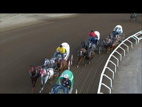 1 Horse Dead In Calgary Stampede Chuckwagon Race
