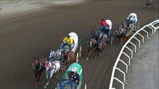 1 horse dead in Calgary Stampede chuckwagon race