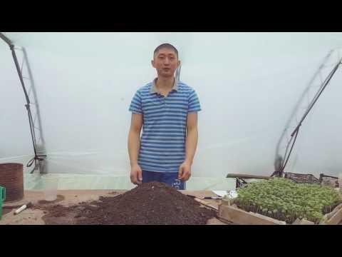 Минимум о рассаде капусты. Как вырастить качественную рассаду капусты  начиная с семечки