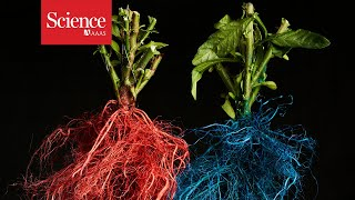 Roots from different plants compete for prime real estate underground