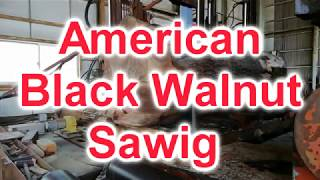 American Black Walnut Sawing!!