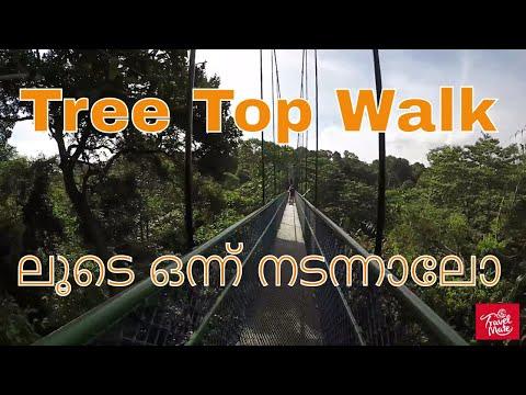 Tree Top Walk Singapore / Nature Park Singapore Malayalam Vlog   Singapore Part 3