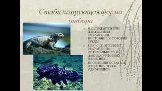 Естественный отбор- главная движущая сила эволюции.AVI