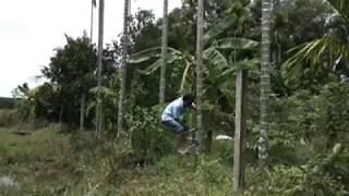 Dụng cụ trèo dừa - Dụng cụ leo dừa - Leo cả cau nhanh như máy.