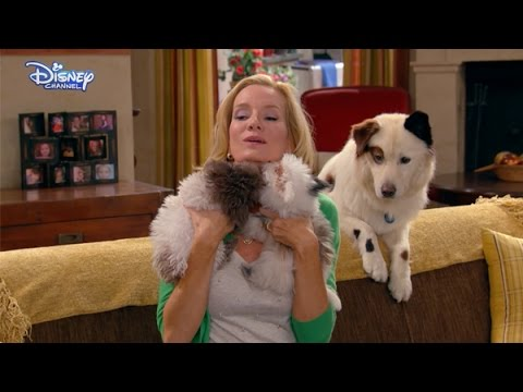 Dog With A Blog - Cute Puppies! - Official Disney Channel UK HD