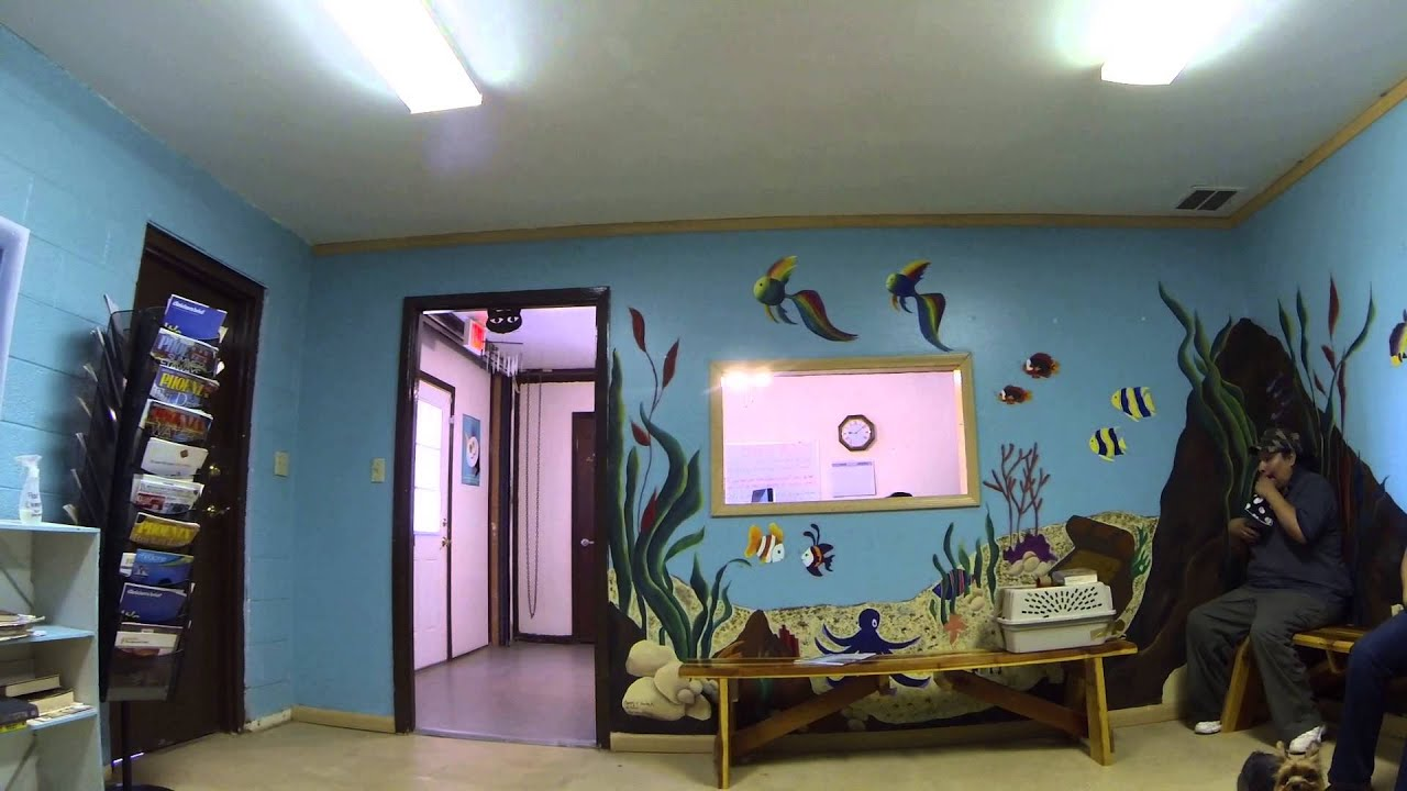Veterinary Waiting Room Design