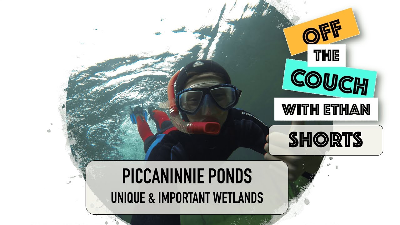 What Makes Piccaninnie Ponds So Unique?   Off the Couch with Ethan Shorts