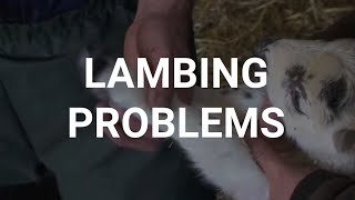 Lambing problems