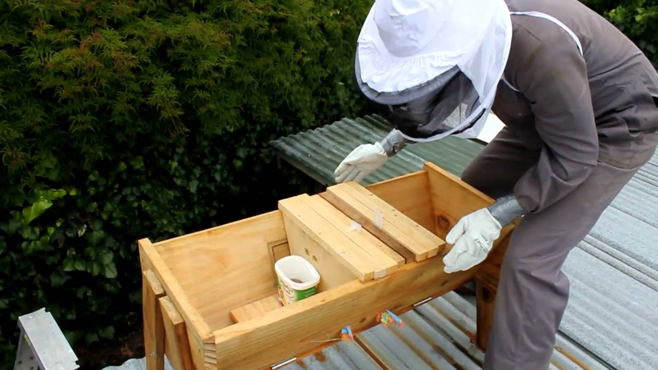 How to feed your bees and treat for Varroa in a Top Bar ...