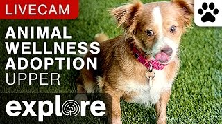 Upper Animal Wellness Adoption Camera powered by EXPLORE.org