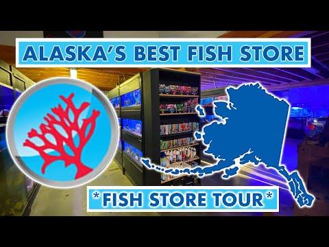 ALASKA FISH STORE TOUR *Alaska Fish And Coral LLC*