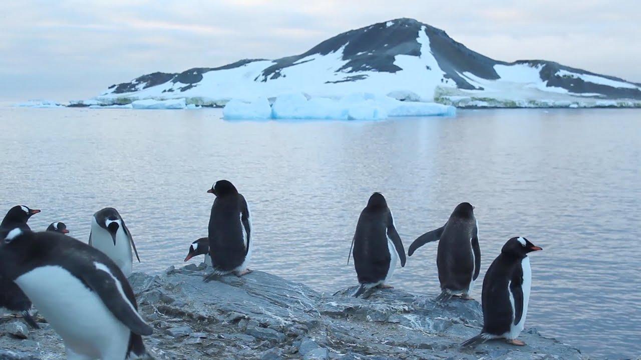 La Antártida es el termostato del planeta (ver VIDEO)