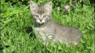 little kitten caught a mouse,маленький котенок поймал мышь