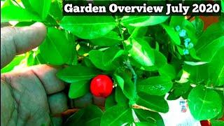 ये है मेरा प्यारा सा बागीचा। My Rooftop gardening Overview July 2020
