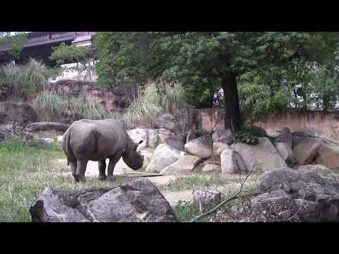 #6 Sep 2017 Black rhino at Tennoji zoo, Osaka, Japan