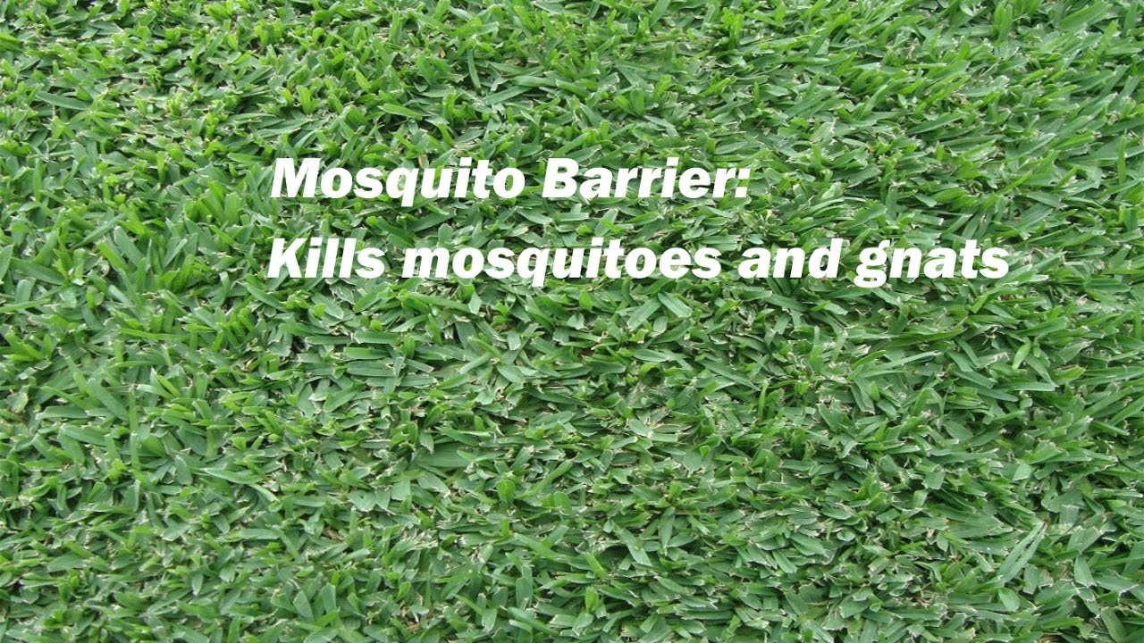 mosquito spray for yards youtube