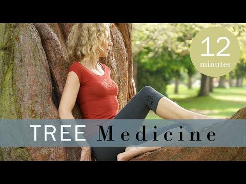 Spirit Medicine of Trees | Five Element Theory | Wood Element | Part One of Seven