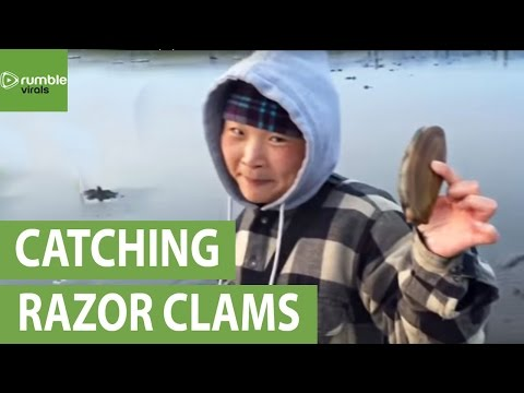 How to catch and prepare Pacific razor clams