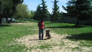 Best Dog Training In Sacramento Dog Park Top
