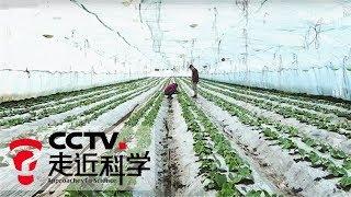 《走近科学》农田也爱甲壳素 生物肥料虾蟹壳再显功效 20180906 | CCTV走近科学官方频道