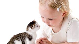 Посмотрите!Кошки прикольно играют с детьми!Интересно и смешно!