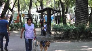 Perros en el Parque México