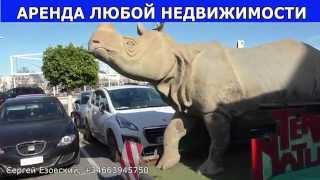 Как перевозят носорогов для TERRA NATURA, Benidorm, фальшивые испанские носороги