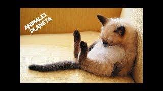 Animals Are Idiots #1 🔴 Funny Animals Videos | Animales Divertidos ...