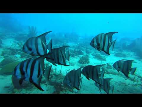 DIVING IN THE CARIBBEAN SEA   A 90 MINUTE UNDERWATER RELAXATION VIDEO