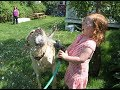 YOU can't KEEP YOUR FACE SERIOUS while watching this - FUNNY KIDS and ANIMALS compilation