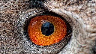 Как животные видят окружающий мир?