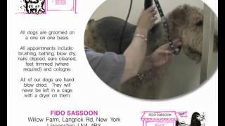 Dog Grooming And Dog Grooming Training