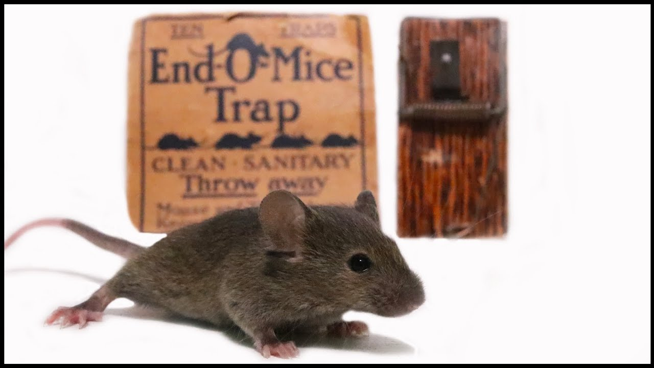 the-tiny-end-o-mice-mousetrap-from-1914-mousetrap-monday
