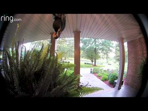 Madison - Ring Doorbell alert... can you imagine seeing THIS on your camera???