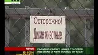 Bison farm in Russia