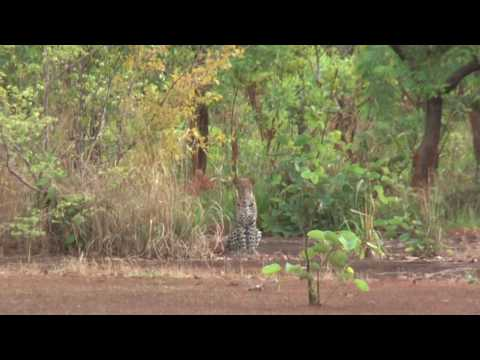Hunting in Central African Republic