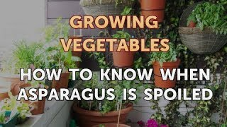 How to Know When Asparagus is Spoiled