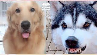 Dog:Funny dog  (Dog Video) 009 [Cute dog] Funny pet | Nana Pet Vlog 2019