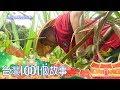 深山黑糖饅頭 返鄉青農振興蔗糖產業 part4 台灣1001個故事