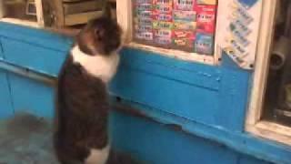 кошка в окошко