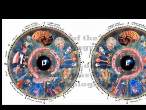 how to read eyes iridology