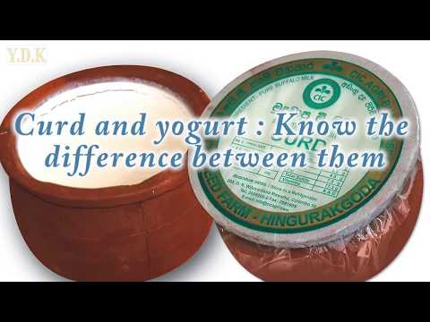 yogurt-vs-curd---know-the-difference-between-them