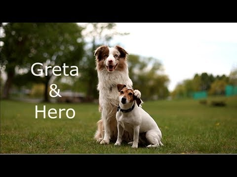 DOG TRICKS & DOGFRISBEE by Greta&Hero | FlyTeam_By