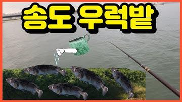 [피싱28호]인천 송도신항교  우럭밭에 다녀오다~우럭 줍줍~
